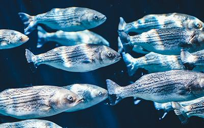 vedikus-asztrologia-aszcendens-halak