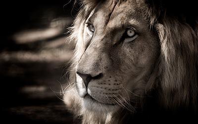 vedikus-asztrologia-aszcendens-oroszlan
